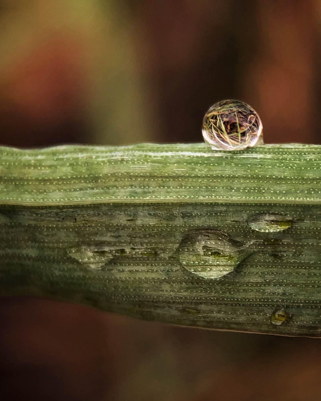 prírodné makro fotografie