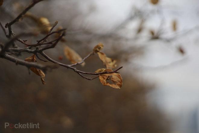 مراجعات Canon EOS RP: إطار كامل بدون مرآة بسعر معقول 1