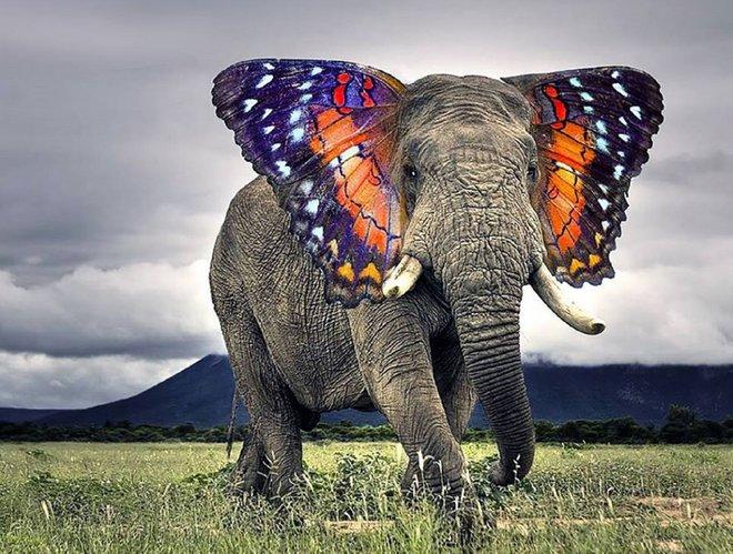 Yeni heyvanlar Photoshop 14-ün gücü ilə təsəvvür etməkdən dəli olurlar