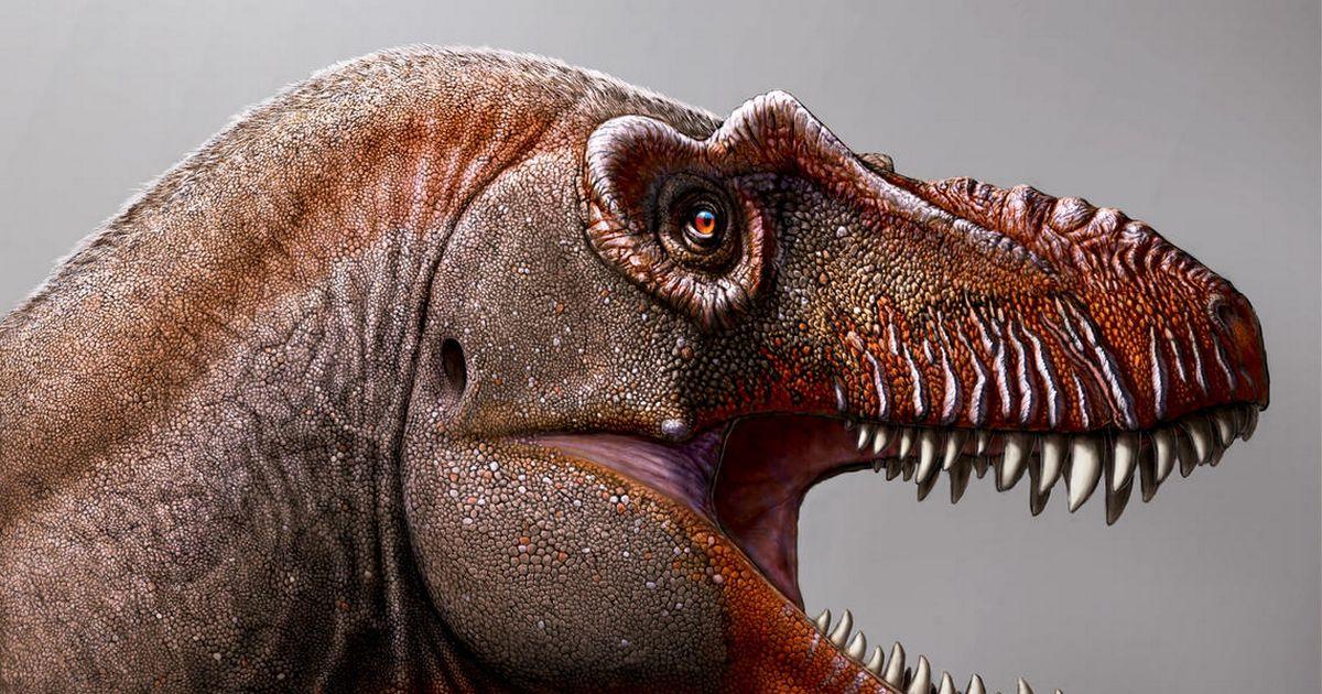& # 039; Thần chết & # 039; khủng long lang thang Trái đất cùng với T.Rex 79 triệu năm trước 1
